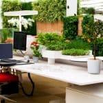 Plantas no escritório e para a casa: benefícios 1