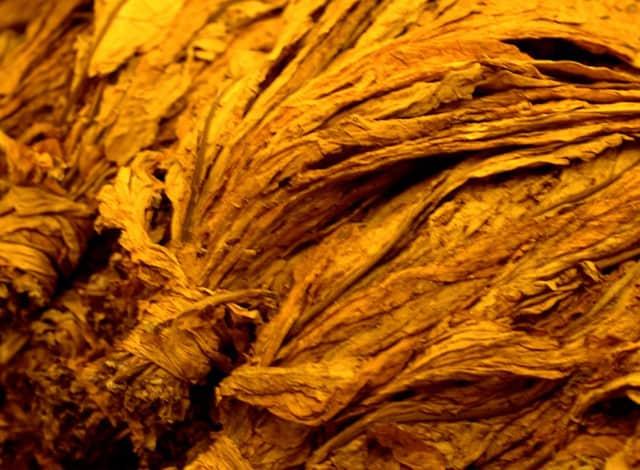 Tabaco - Dia 20 - Erveirança 5.0 2